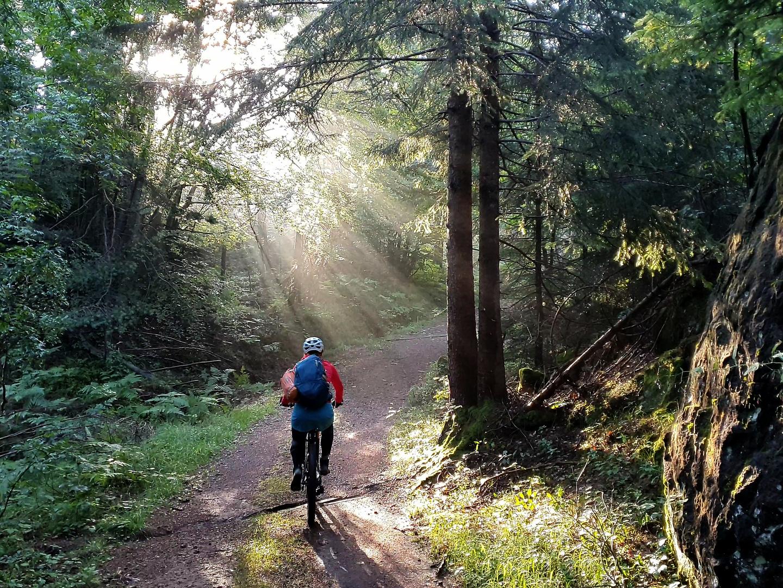 aldein-forest1.jpg