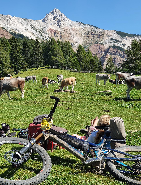 jochgrimm-cows1.jpg