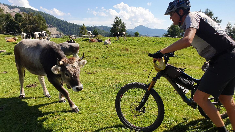jochgrimm-cows2.jpg