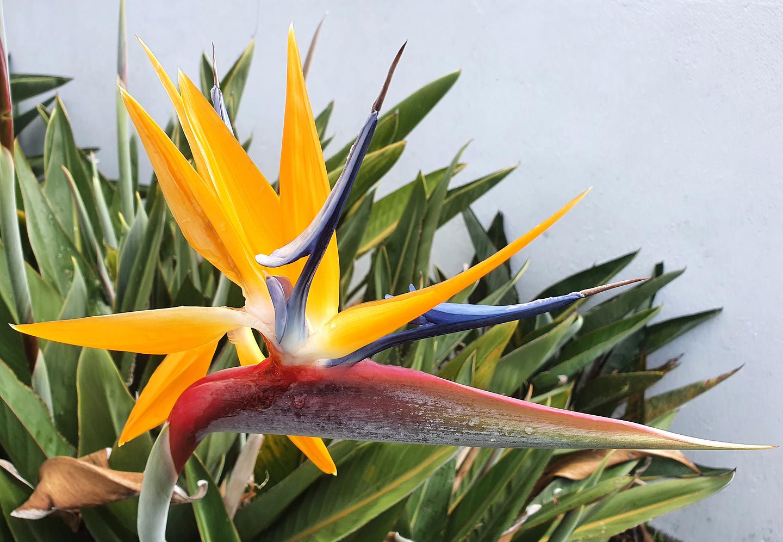 ferraria-flower1.jpg
