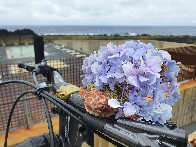 ferraria-flower2.jpg