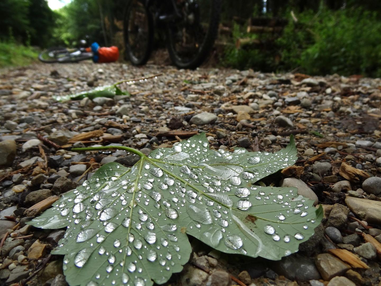 ammer-leaf.jpg