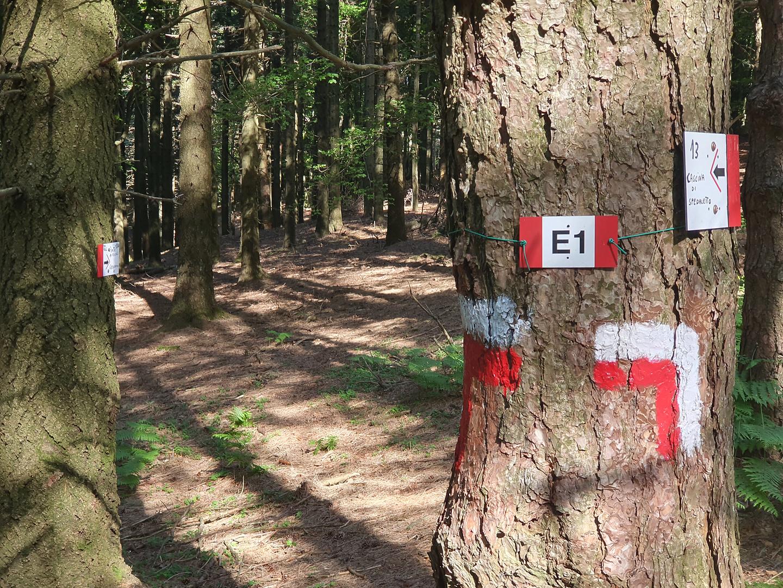 acquerino-trail2.jpg