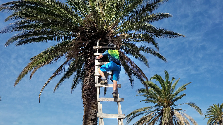 alojera-treeclimb.jpg