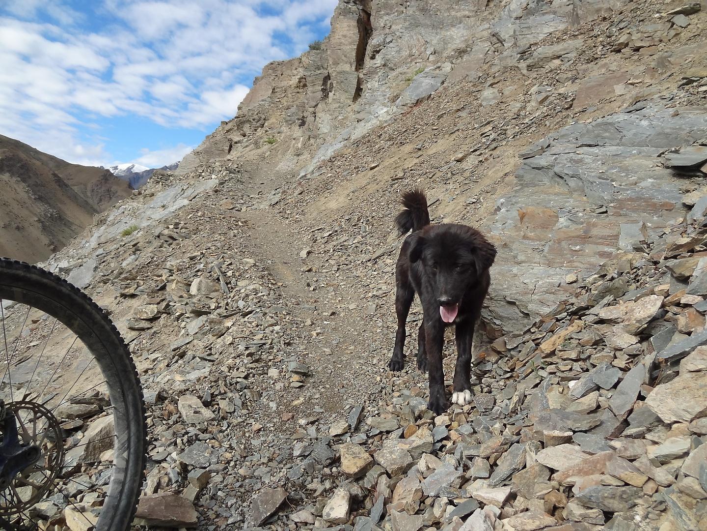phuktal-trail2.jpg