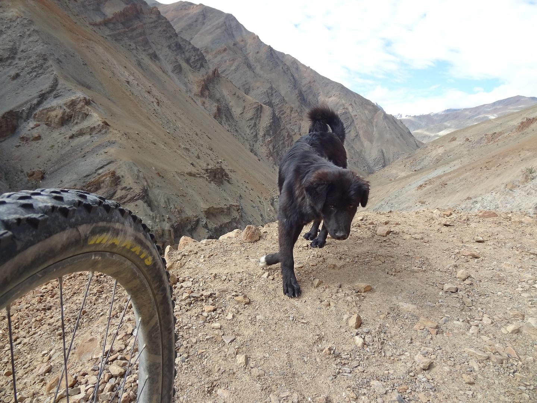 phuktal-trail5.jpg