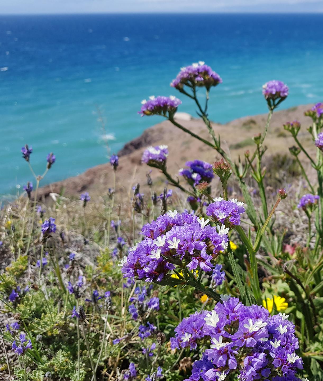 cabodegata-flowers.jpg