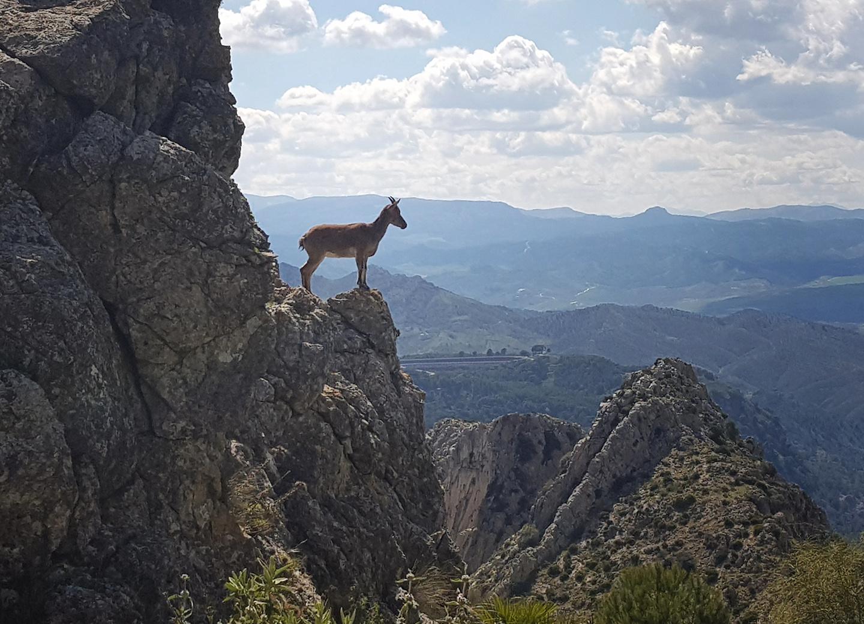elchorro-goat.jpg