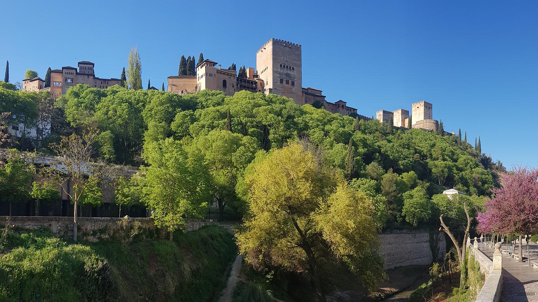granada-alhambratrees.jpg