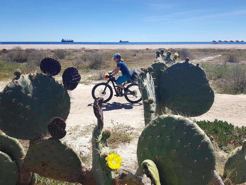playavera-cactus.jpg