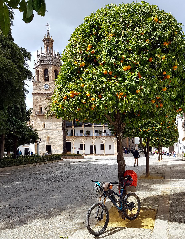 ronda-orangetree.jpg