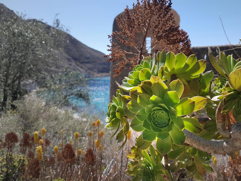 sanpedro-flower.jpg