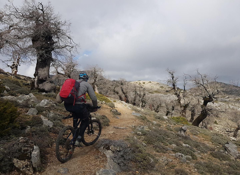 sierranieves-trail2.jpg