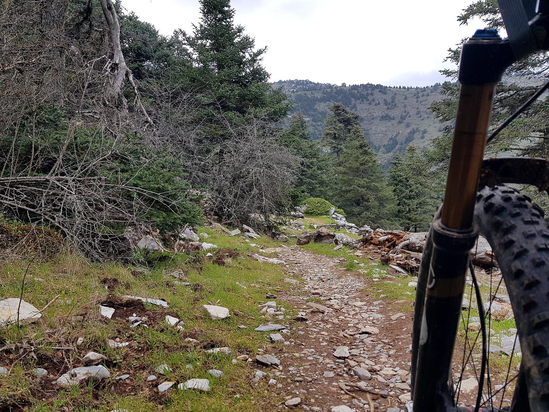 sierranieves-trail9.jpg
