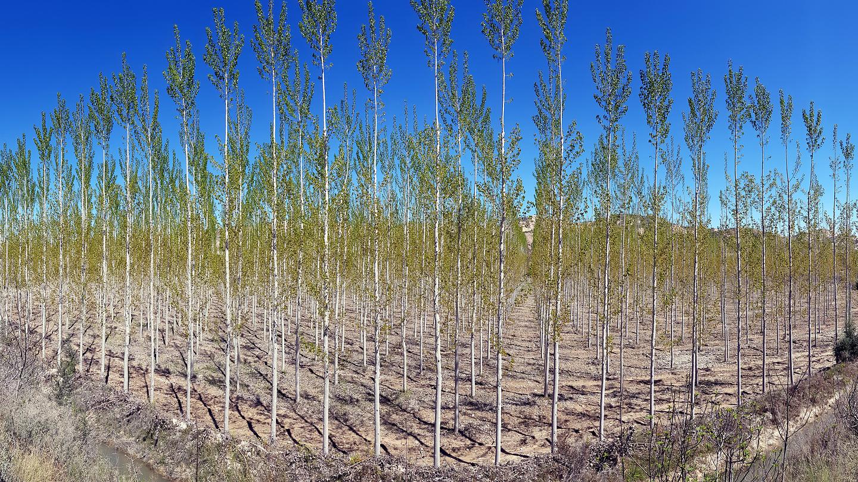 torres-trees2.jpg
